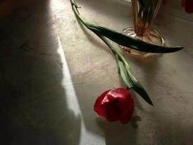 """immagine di Vincenzo Nesta """"I tulipani sono troppo eccitabili, è inverno qui, guarda quanto ogni cosa sia bianca, quieta e innevata. Imparo la pace, mentre si posa quieta a me vicina come la luce su questi muri bianchi, questo letto, queste mani. Non sono nessuno; niente a che fare con le esplosioni. Ho dato il mio nome e i vestiti alle infermiere la mia storia all'anestesista e il mio corpo ai chirurghi."""""""