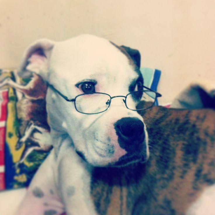 Perro hipster #hipsterdog #hipster #dog #doglover