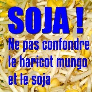 Attention ! La pousse de soja est en fait une pousse de haricot mungo