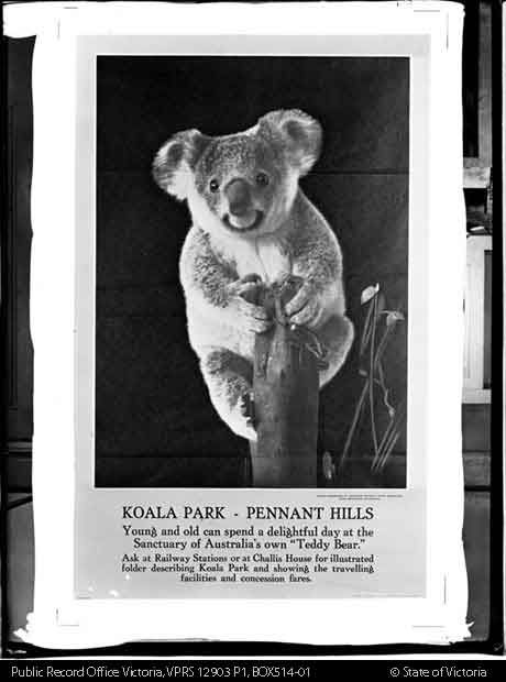 POSTER- KOALA PARK, PENNANT HILLS NSW (PHOTOGRAPHED BY CAZNEAUX) c1930