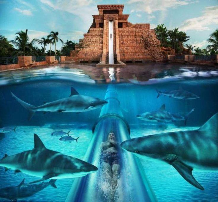 Я в шоке!: Аттракцион «Прыжок веры», проплывая по которому, можно встретить самых настоящих акул
