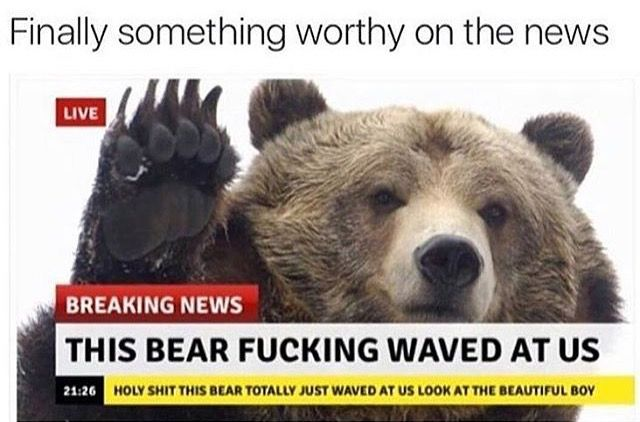 I love that they put curse words on the news because they were in shock that a bear waved at them