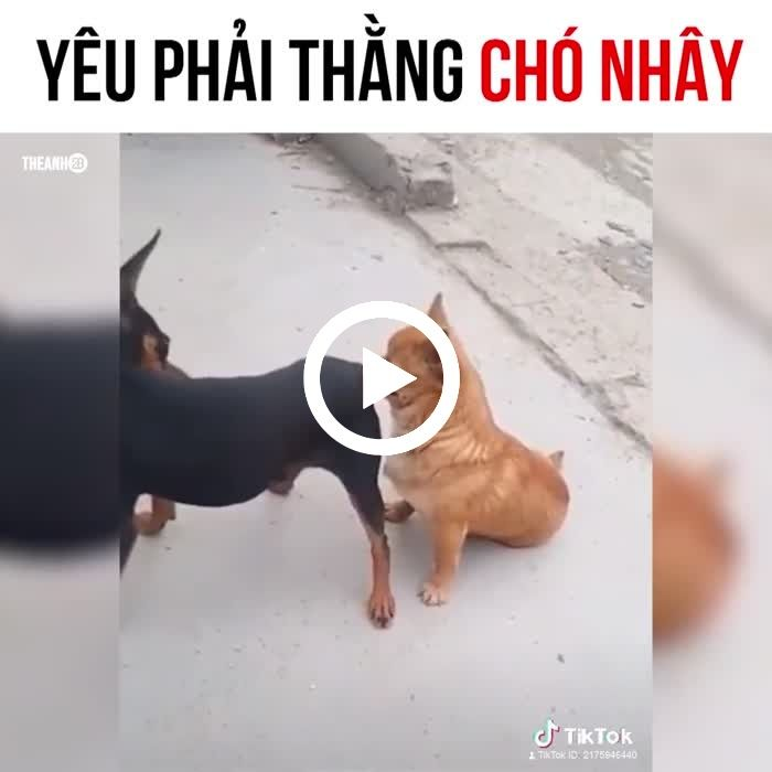 You Are Execrable Cutepets Funny Lol Dogs Teasing Funny