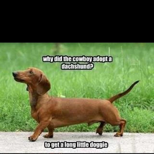 Fantastic Winnie Chubby Adorable Dog - b5bb840cde2df7cc43d579602c8f4da5--weenie-dogs-doggies  Graphic_60904  .jpg