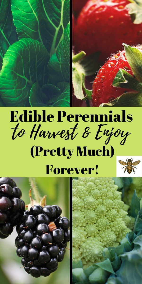 Edible Perennials To Harvest And Enjoy Pretty Much Forever