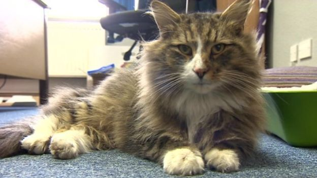 Clive the cat -- Missing cat found in Nottinghamshire pet food warehouse