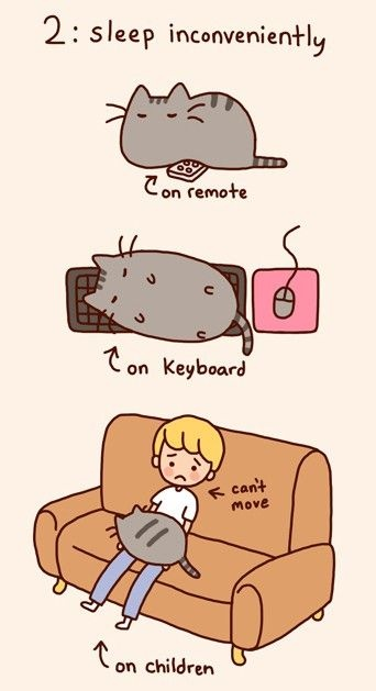 ...on laptop...on shoes...on towels when you are in the shower... (pusheen)