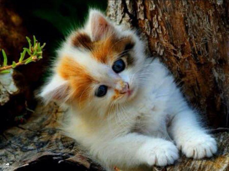 Kattekillinger er de sødeste dyr i verden jeg elsker dem så højt