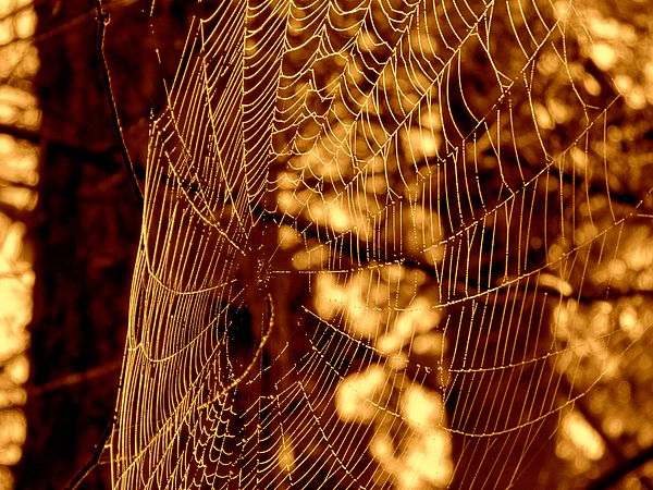 Golden Nature Spiderweb By Dianne Cowen In 2020 Macro Photography Nature Macro Photography Tips Macro Photography Eyes