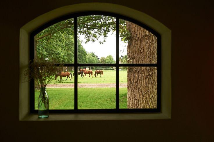 Vanuit de potstal kijk je zo naar de paarden op het weiland