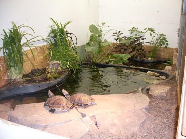 Pin by helen banevicius on turtle ponds pinterest turtle pond turtles and ponds Diy indoor turtle pond