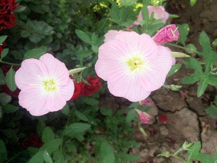 Pin by saja Kurdii on Sarah photographer Plants