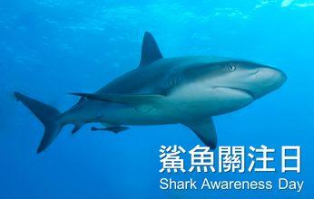 愛護鯊魚 - Google 搜尋