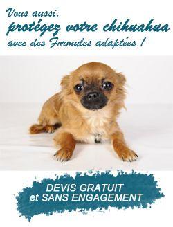 Assurance chien avec photo d'Harybo