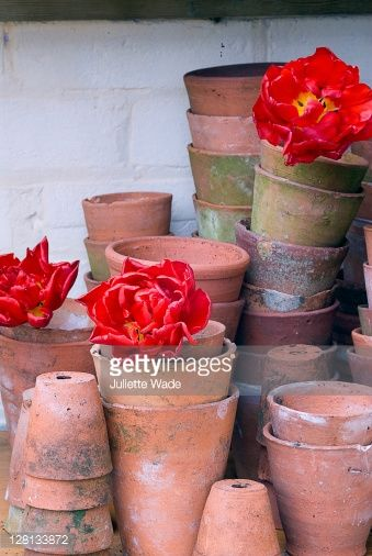 Weathered Terracotta Pot Colour Inspiration