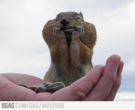 KawaiiiPhotos, Chubby Cheek, Sunflowers Seeds, Squirrels, Funny Pictures, Happy, Chipmunks, Funny Animal, Heavens