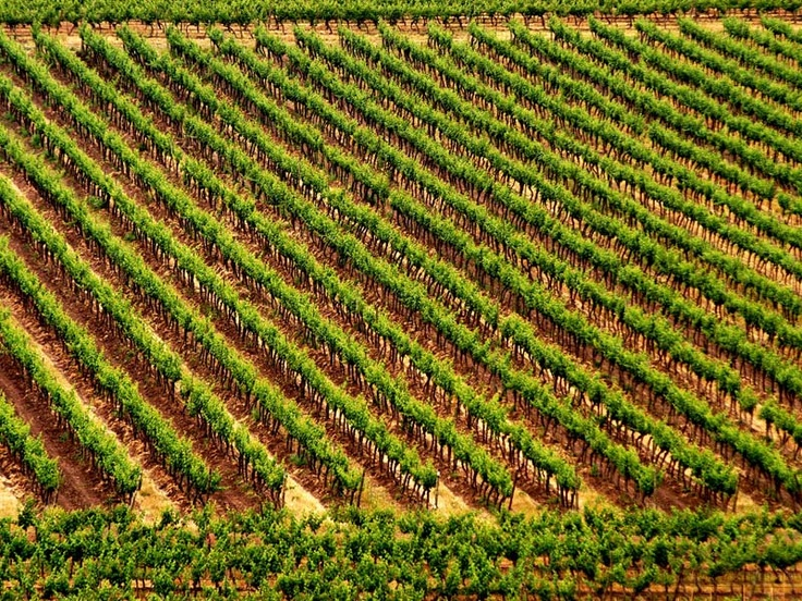 Emiliana Organic Vineyards, Maipo Valley, Chile, Vinedos Organicos Emiliana, novas Cabernet Sauvignon - Merlot 2008 grows here ...