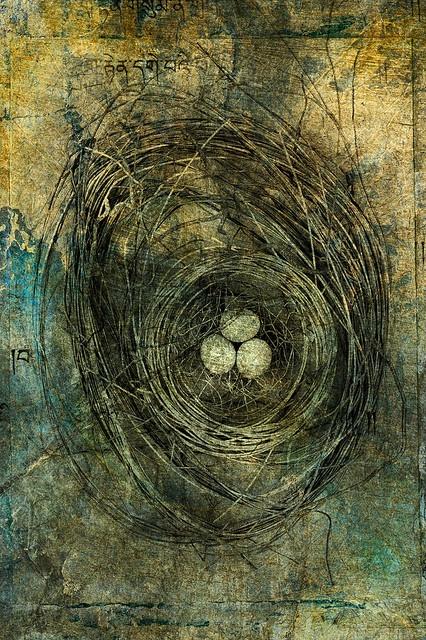 Nest with three eggs. Photo based illustration