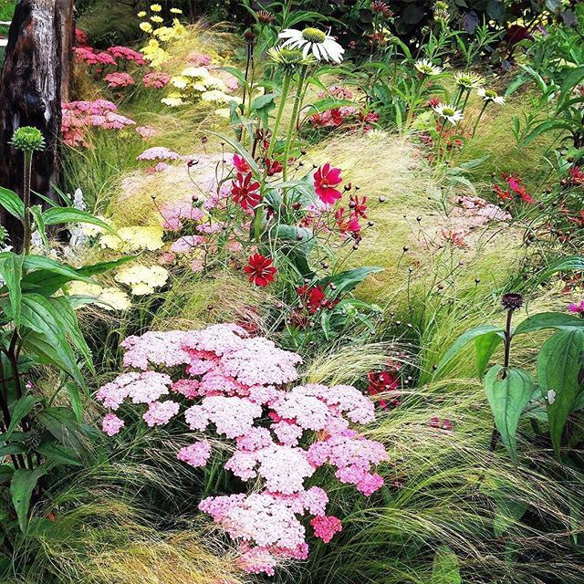 Hampton court palace flower show is on!  And there is great garden inspiration to be found there.  Love this very do-able planting scheme of yarrow, cosmos, grasses and coneflowers (am I missing anything?) :camera:: @therealmrslwilson . Hampton Court Flow