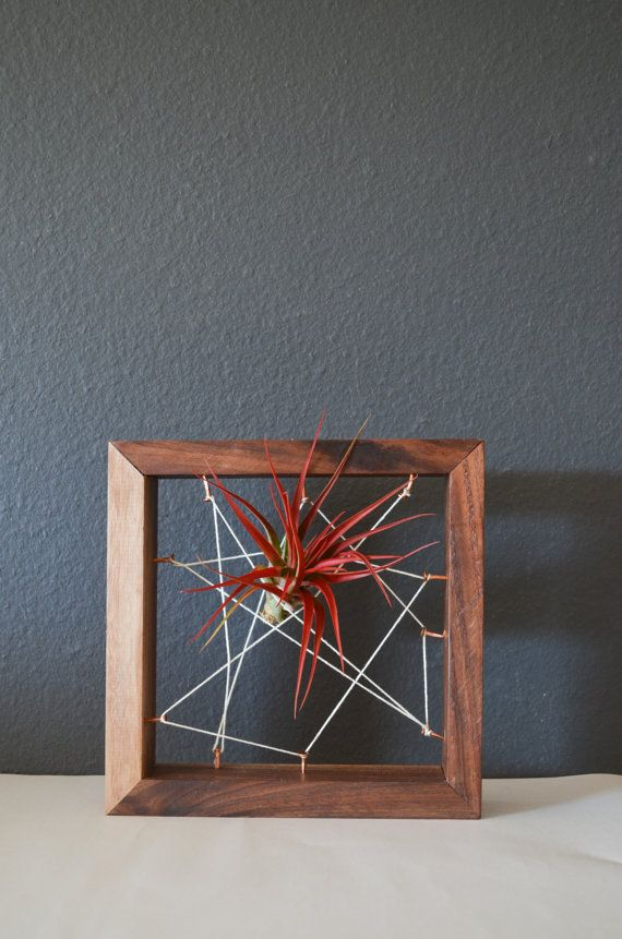 Air plant Black Walnut Recycled salvaged wood by triple7recycled