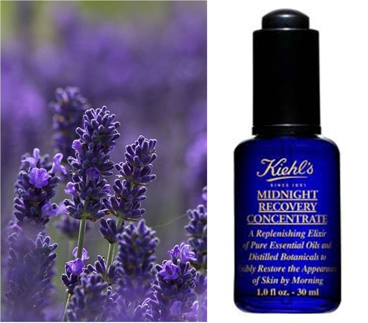 Our Midnight Recovery Concentrate - a true miracle worker!