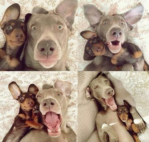Best. Selfies. Ever.