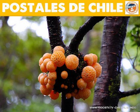 POSTALES DE CHILE - Colecciones - Google+