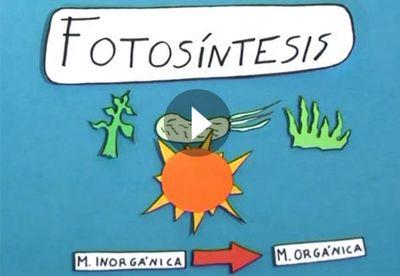 Las plantas: fotosíntesis y respiración