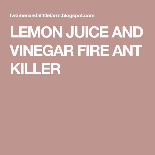 LEMON JUICE AND VINEGAR FIRE ANT KILLER