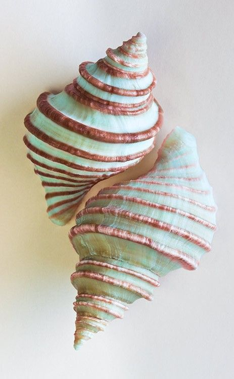 ❥ These two beautiful seafoam green seashells were slipped into the pocket of your character. Where did they find them and why is your character carrying them around?