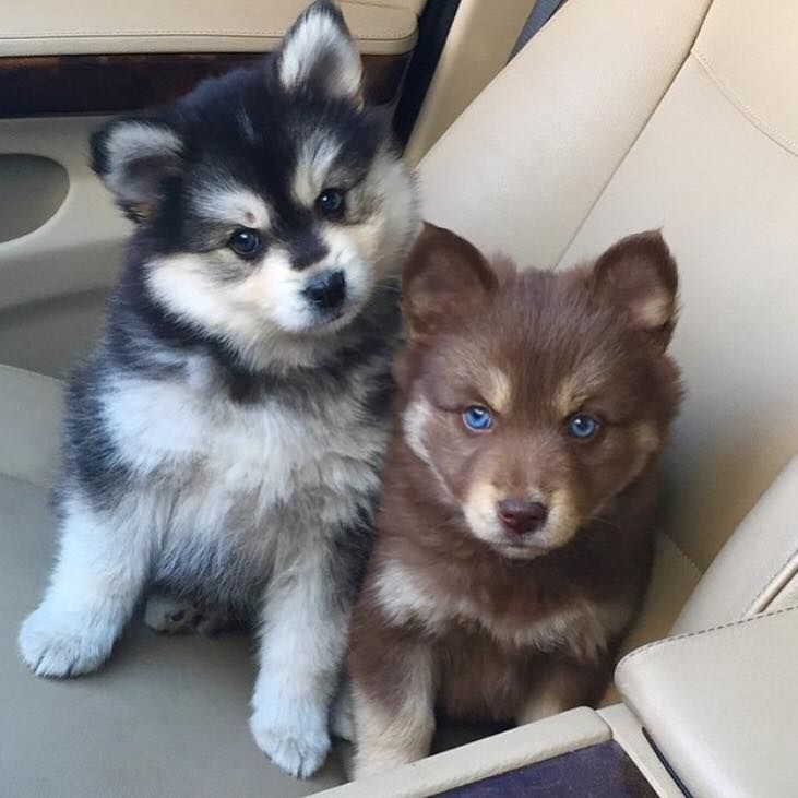Have some adorable pups.