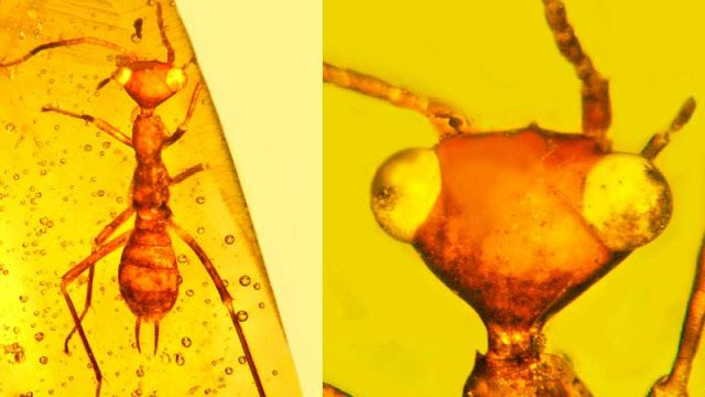 Scientists discover 'alien' insect in amber from 100 million years ago | Geology IN