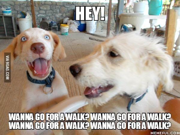 Hey! Wanna go for a walk? Wanna go for a walk? Wanna go for a walk? Wanna go for a walk?