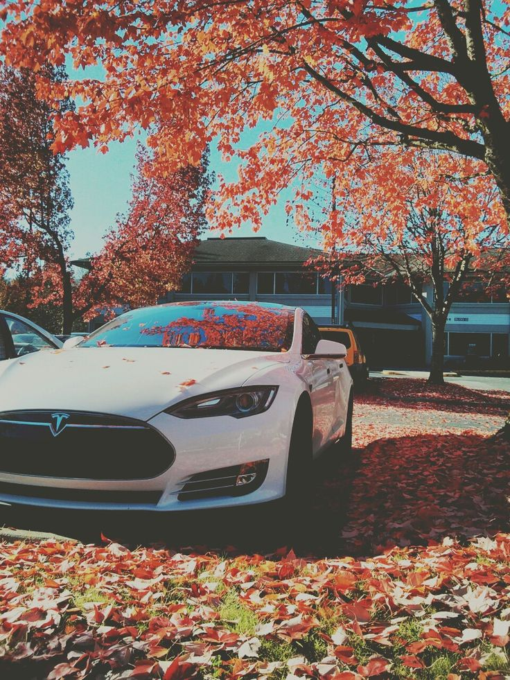 Tesla Model S x Autumn. Did you know that White Bear eBikes use the same batteries as Tesla?