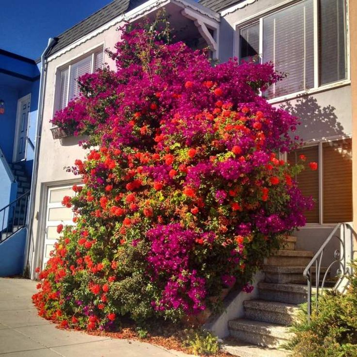 Les 25 meilleures id es de la cat gorie plantes for Plante ulysse