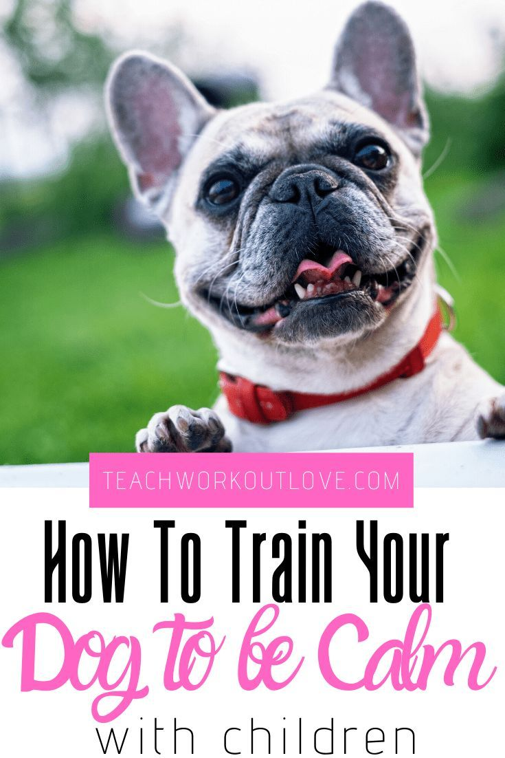 How To Train Your Dog To Be Calm With Children Funny Dog Names