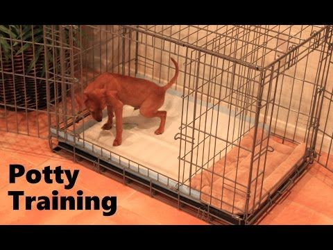 Potty Training Puppy Apartment - Official Full Video - How To Potty Train A Puppy Fast & Easy - YouTube