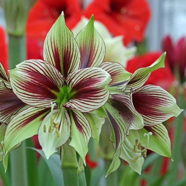 Ber ideen zu zimmerpflanze auf pinterest for Zimmerpflanzen kleine fliegen