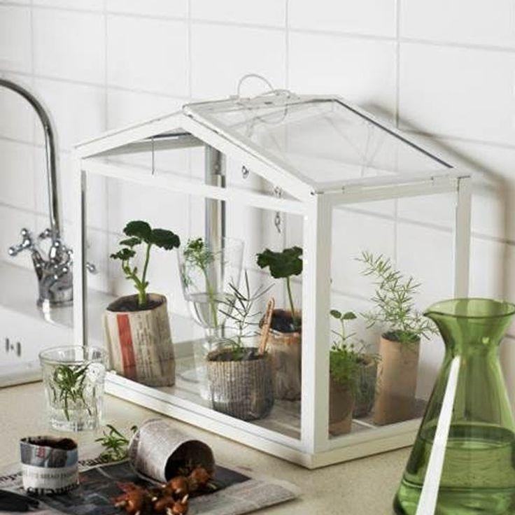 застекленная тепличка для комнатных растений фото если