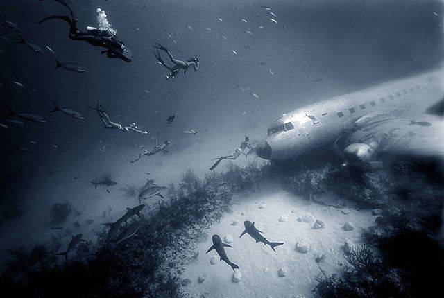 Plane wreck with eight sharks, four free divers and one scuba diver with underwater camera. Can you find them all?