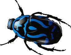 Beetle, Insetto, Scarabeo, Insetto, Blu