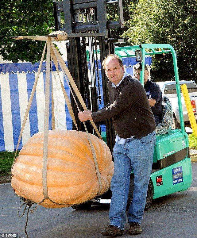 Giant pumpkin!