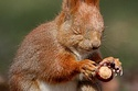 ahhhh NUTS!: Cute Animal, Funny Pics, Thank You Lord, Perfect Time Photos, Squirrels, Stars Wars, Baby Animal, Force, Funny Animal