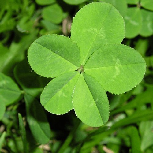 how to get rid of clover in yard
