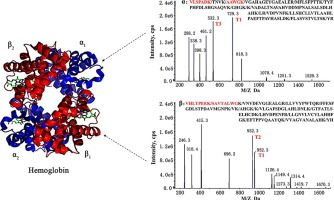 #JoP: A novel tandem mass spectrometry method for first-line screening of mainly beta-thalassemia from dried blood spots