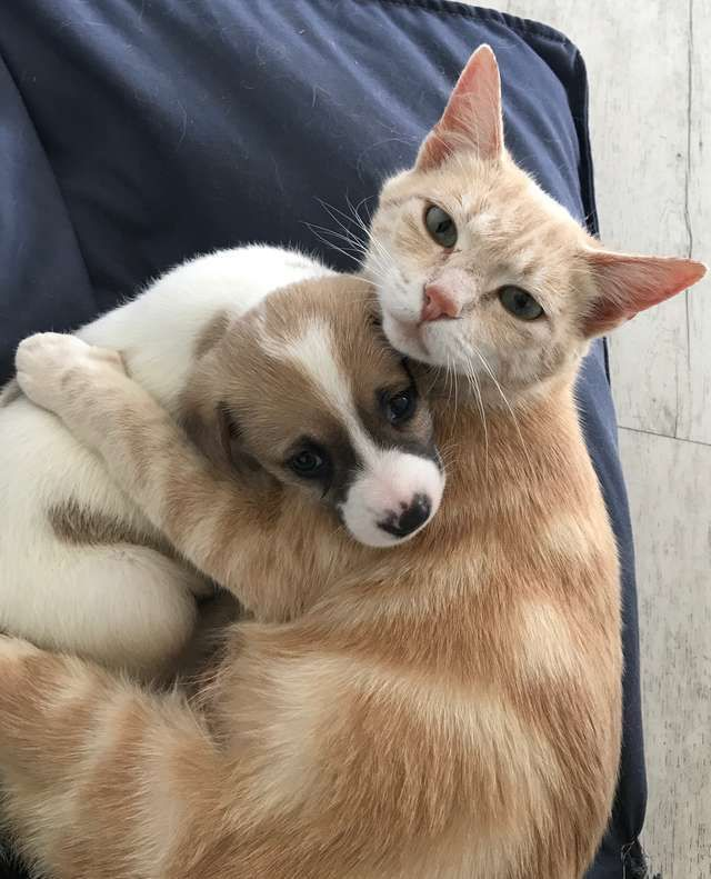 Cat Mom Adopts Orphaned Litter Of Puppies And Raises Them As Her Own In 2020 Cute Puppies And Kittens Kittens And Puppies Cute Cats And Dogs