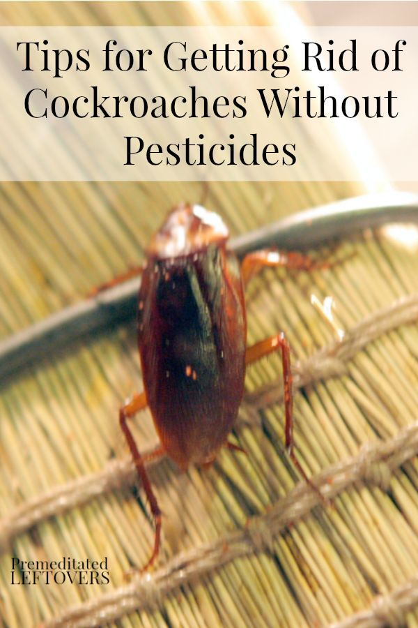 Tips for Getting Rid of Cockroaches Without Pesticides ...