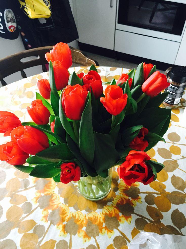 Tulipaner ❤️