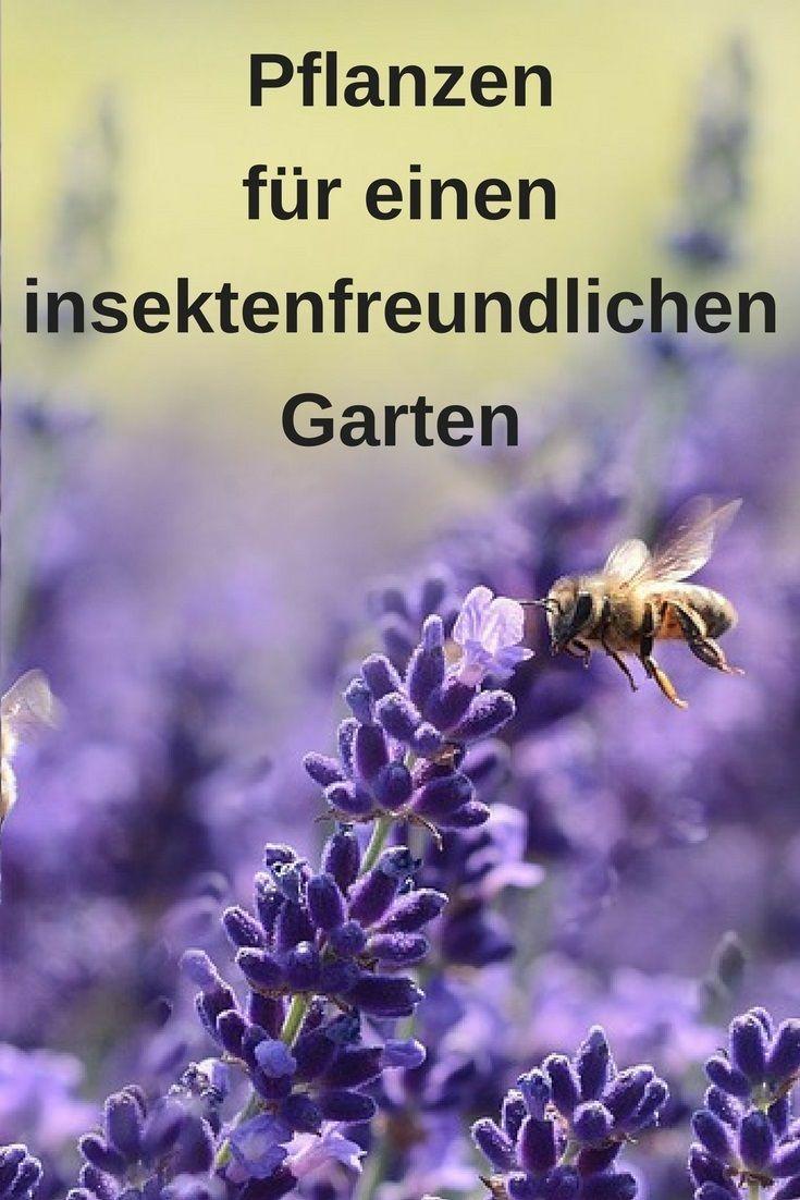 Bienenfreundlicher Garten – die richtigen Pflanzen