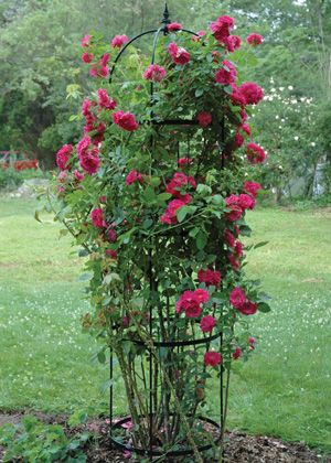 Medium Rose Pillar Obelisk - Uprights are solid steel rods, powder coated black and topped with decorative finials. Flat steel horizontal bands. Shipped flat for economical freight and easily assembled with a screwdriver. All hardware included.